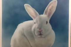 Rabbit Portrait