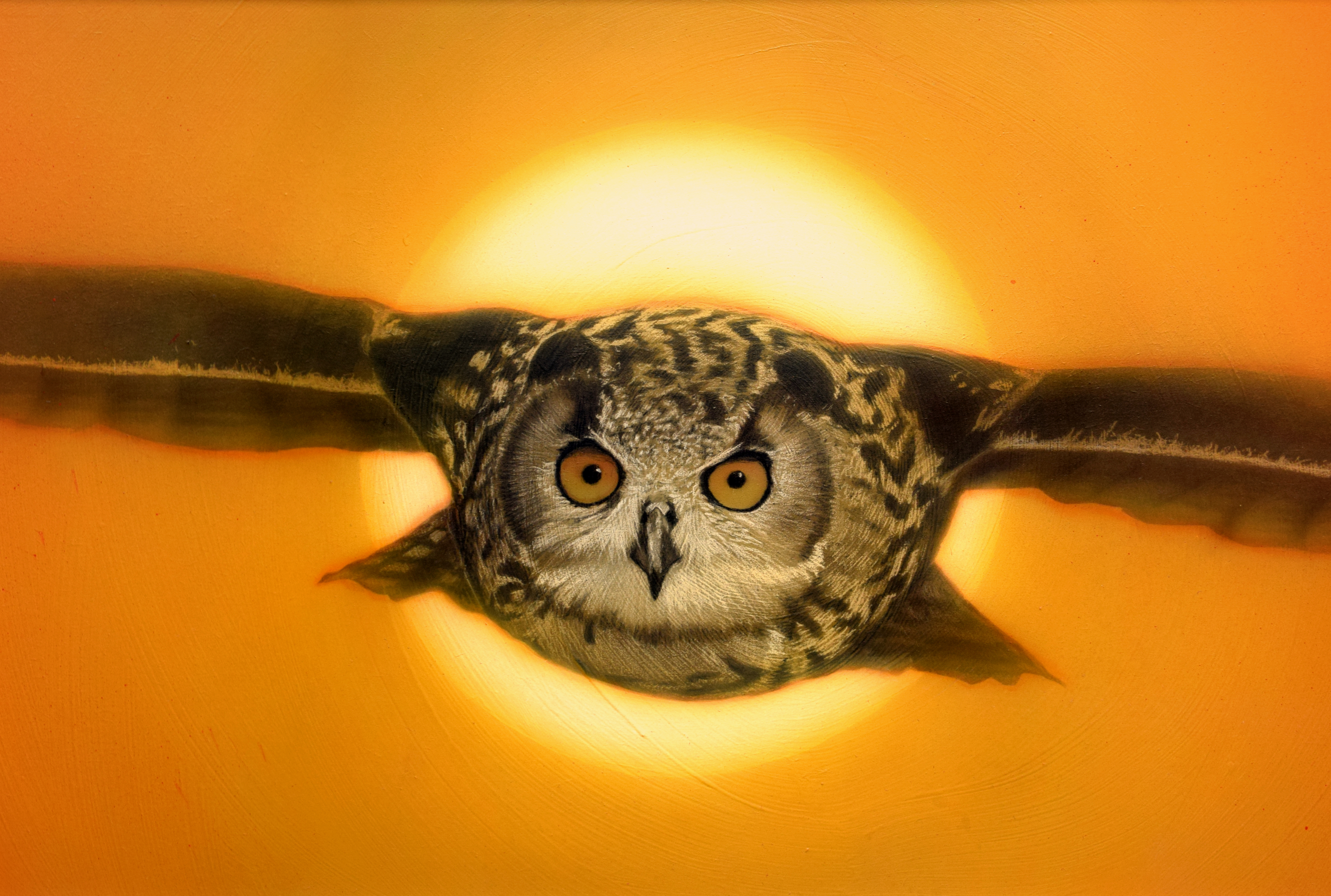 OWL FINAL cropped 01